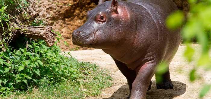 zoo-dublines