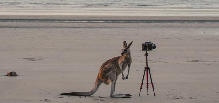 requisitos-para-trabajar-en-australia